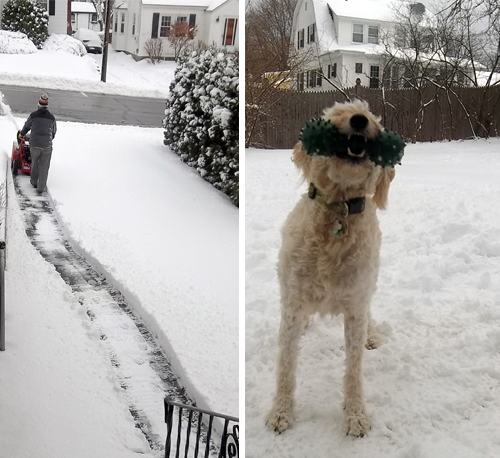 snow-dog-playing-snow-thrower-2012