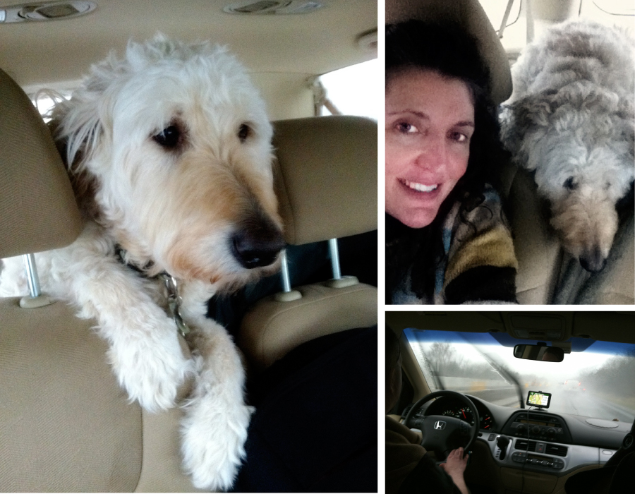 georgia-chance-dog-road-trip