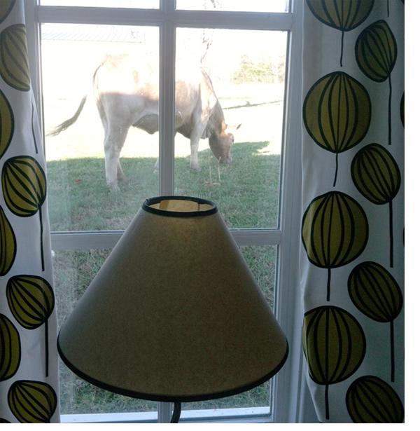betty-sue-cow-window-dec