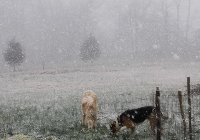 tennessee-blizzard