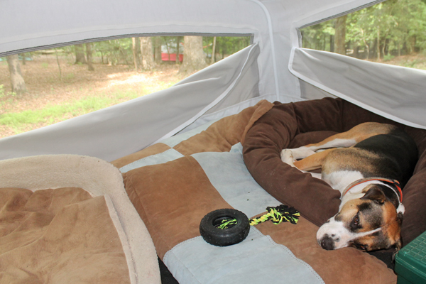 camping-hybrid-popout-dog-bed