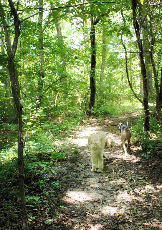 Path Through The Woods Wood-walking-path-dogs